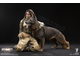 Дженнер ФИГУРКА 1/6 scale A-TACS FG Double Women Soldier JENNER A Style VCF-2037A VERYCOOL
