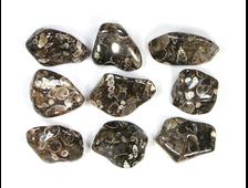 """""""Агат черепаховый"""", халцедон известняк-ракушечник, галтовка в ассортименте (20-30 мм, 5-7 г) №22885"""