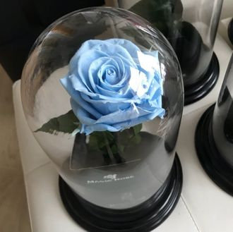 MAGIC ROSE ГОЛУБАЯ
