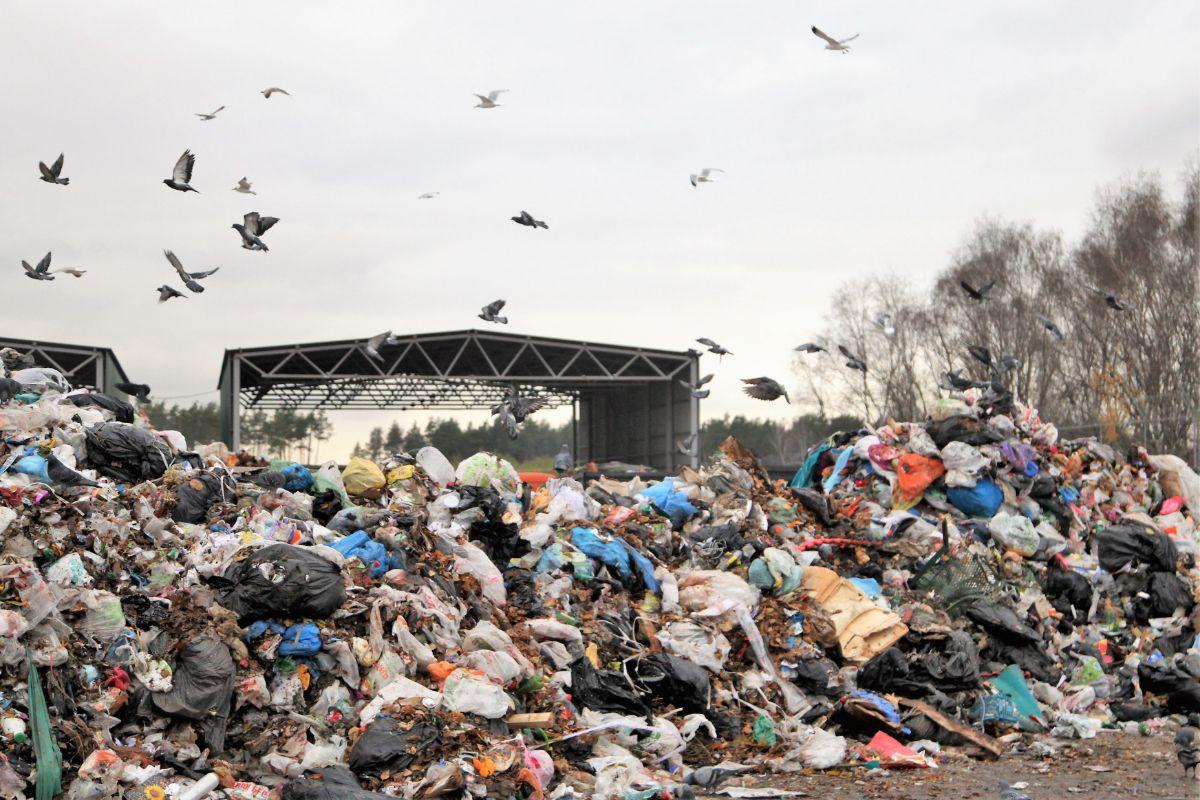 мифология фото люберецкого мусорного полигона сегодняшний день магазинах