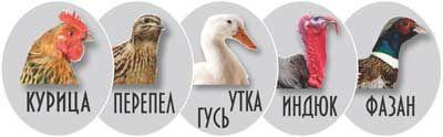 Для инкубации яиц птиц и пресмыкающихся