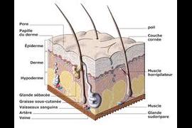 Врач-трихолог + компьютерная диагностика волосистой части головы и волос