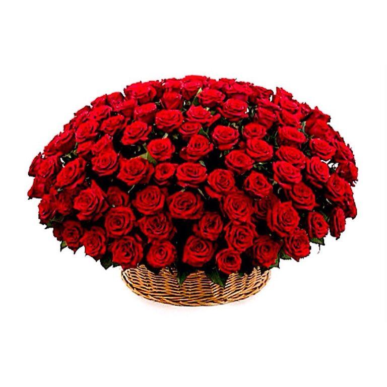 Цветов подарков, лучшие цветы на подарок