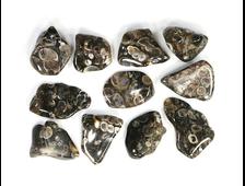 """""""Агат черепаховый"""", халцедон известняк-ракушечник, галтовка в ассортименте (18-25 мм, 2-3 г) №22882"""