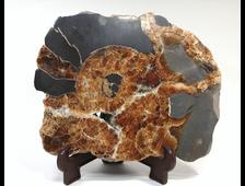 Аммонит, септария, окаменелость, срез полированный, Россия, Адыгея (198*157*40 мм, 1490 г) №17886