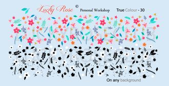 Lucky Rose True Color 30