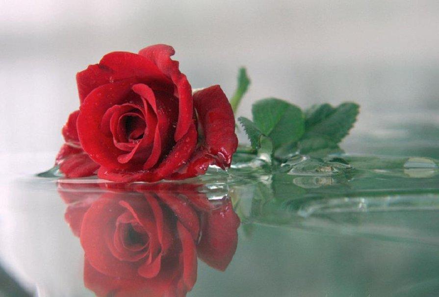 Открытки нижний, гифы красивые розы у воды