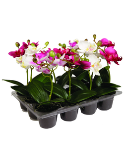 Цветок в горшке  SIA ORCHID POT WITH TRAY S/12 , 050353 ,