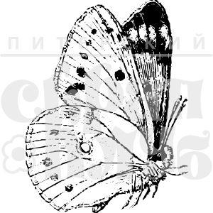 Штамп невесомая бабочка со сложенными крыльями