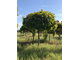 Лиственные деревья и кустарники.