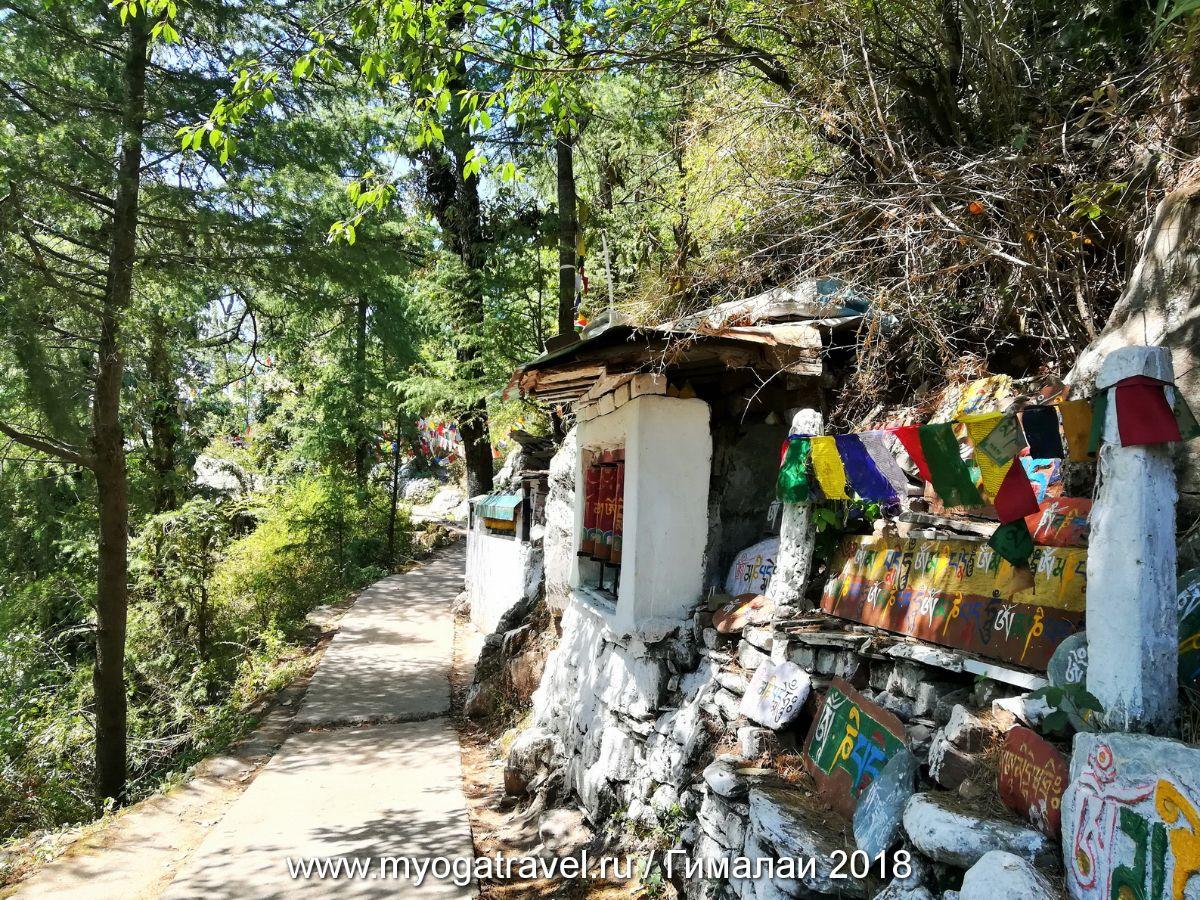 Дарамсала, парикрама вокруг резиденции Далай-Ламы, йога-тур в Индию, myogatravel.ru