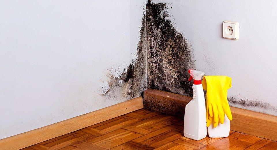 Фото обработки от плесени в квартире